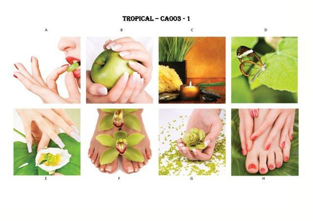 Picture of TROPICAL Canvas-003